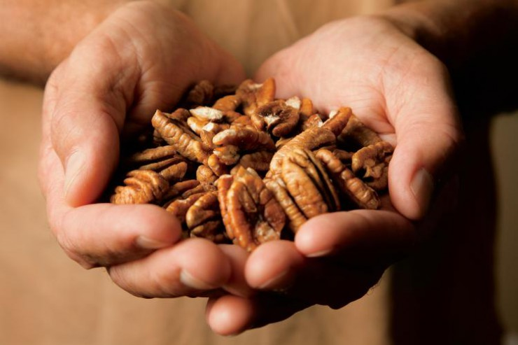 Two hands cupped together holding pecans