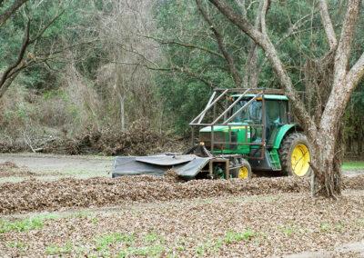 Tractor during pecan harvest