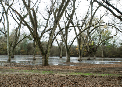 Flooded pecan orchard